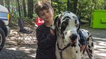 Camping kid with great dane dog