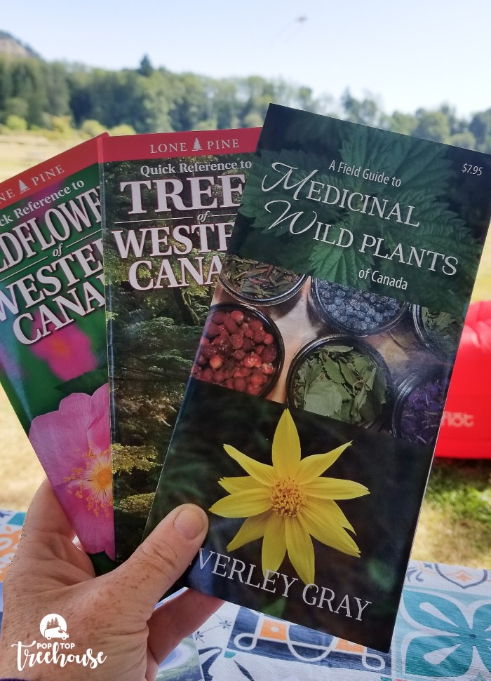 wild plant guides