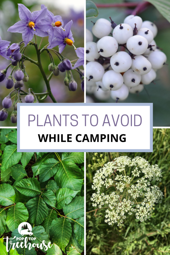 plants to avoid while camping