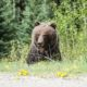 How to Practice Bear Safety While Camping