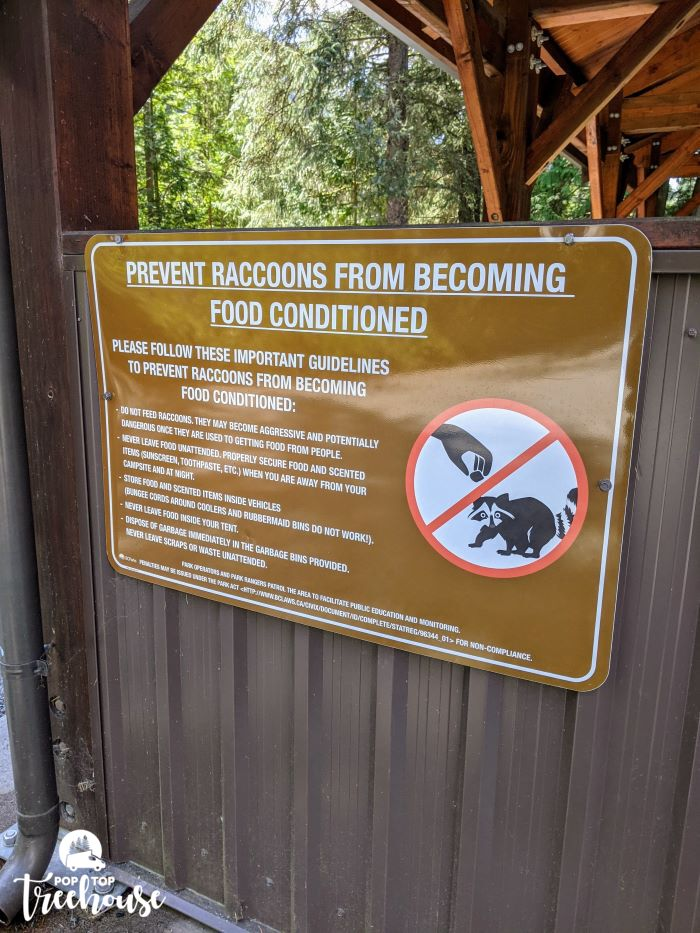prevent raccoons from becoming food conditioned