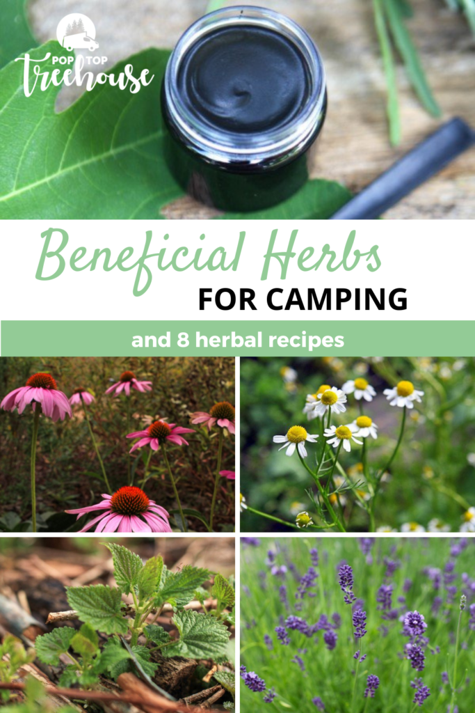 Beneficial Herbs for Camping