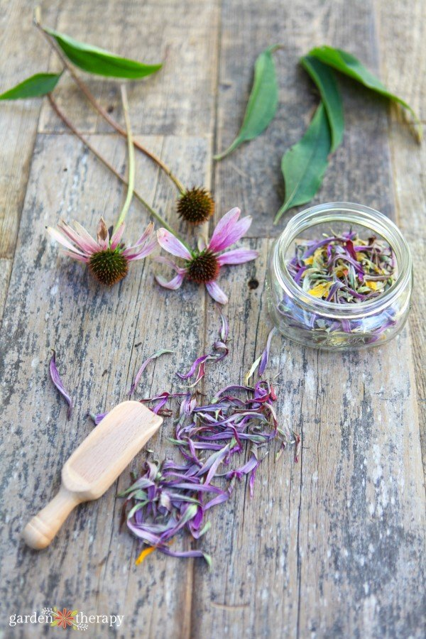 echinacea root tincture for camping
